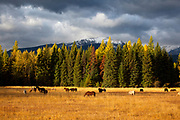 Swan Valley, Horses, Fall, Mission Mountains, Montana
