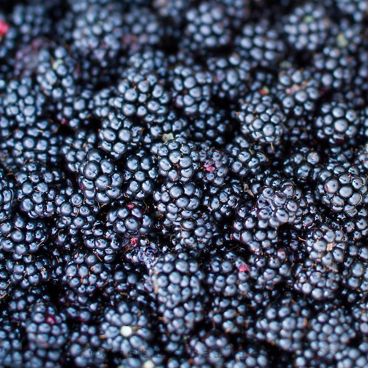 Blackberries from the Oregon coast.