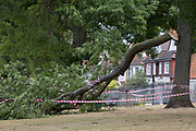 Hazard tape is wrapped around a large branch of a 100 year-old ash tree in full leaf which as detached and fallen during strong overnight winds that followed the UK heatwave which ended over the weekend, on 29th July 2018, in London, England.