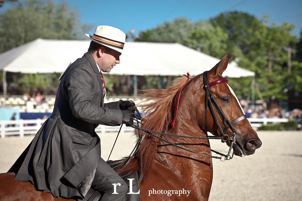 Devon at Sunset American Saddlebred Horse Competition