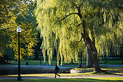 People enjoying the Public Garden in Boston, Massachusetts, USA