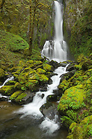 LowerKentucky Falls Siuslaw National Forest Oregon