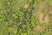 Broadleaf woodland in May. Surrey, UK.