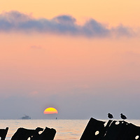 A pair of ruddy turnstones (Arenaria interpres) sitting on decaying old dock structures are partially silhoutted against the sunrise; with a crab boat on the horizon, Port Mahon, Delaware.