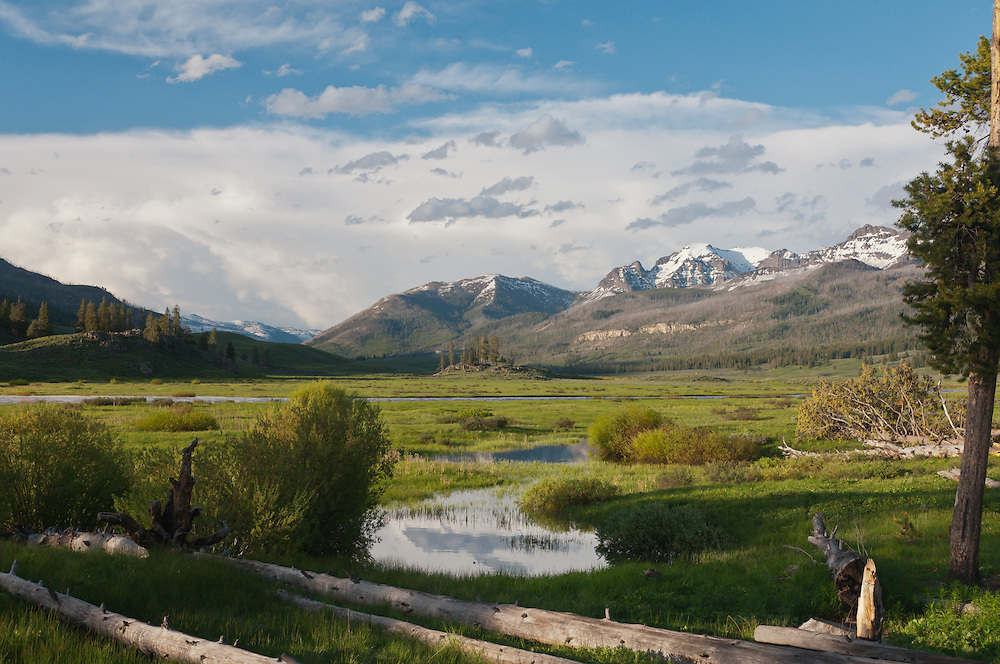 The Yellowstone backcountry, along the Slough Creek in Yellowstone National Park, Wyoming.  Photo by William Byrne Drumm.