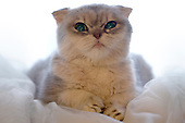 Buster Kitten