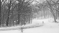 Central Park, feb. 19, 2021