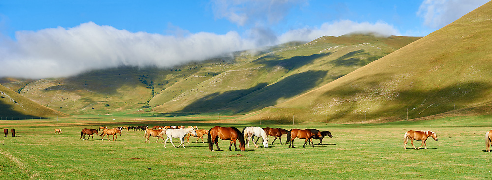 Horses on the Piano Grande, Great Plain, of Castelluccio di Norcia, Parco Nazionale dei Monti Sibillini , Apennine Mountains,  Umbria, Italy. .<br /> <br /> Visit our ITALY HISTORIC PLACES PHOTO COLLECTION for more   photos of Italy to download or buy as prints https://funkystock.photoshelter.com/gallery-collection/2b-Pictures-Images-of-Italy-Photos-of-Italian-Historic-Landmark-Sites/C0000qxA2zGFjd_k
