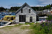 A boat house and lobster wharf with Lupines flowering in the tiny village of Cozy Harbor in Southport, Boothbay, Maine.