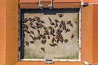 Alter do Chão, Portugal - 18 May 2020: Aerial view of Coudelaria de Alter, a stud farm breeding horses.