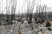 """West Australia's biggest bushfire centred on the town of Northcliffe and burnt through nearly 85,000 hectares and prompted questions about the role of prescribed burning in the state.<br /> Incident controller Greg Mair told a packed community meeting in the nearby town of Pemberton that Northcliffe """"was not out of the woods yet"""" but Windy Harbour was """"quite safe"""".<br /> He said favourable weather conditions and work done by firefighters had made a huge difference.<br /> Authorities had feared the fire would destroy Northcliffe, which had been declared indefensible, but managed to prevent it from doing so."""