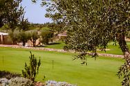 06-10-2015 -  Foto van Olijfbomen bij Assoufid Golf Club in Marrakech, Marokko. De 18 holes van de Assoufid Golf Club zijn ontworpen door Niall Cameron. Bij helder weer bieden enkele holes fraaie uitzichten op het Atlas gebergte.