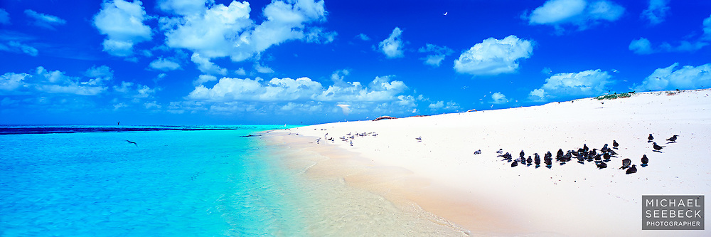 A panoramic photograph of the beach at Michaelmas Cay, featuring sooty terns and crested terns, and wonderfully clear aqua water.<br /> <br /> Code: HAQI0001<br /> <br /> Limited Edition print