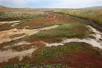 Dry steam, Bagerova Steppe, Kerch Peninsula, Crimea, Ukraine