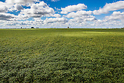 2015/03/04 – Monte Maiz, Argentina: Soy field on the Manuelita farm in Monte Maiz. The town Monte Maiz was named by the amount of corn that once used to be produced on the region. Nowadays soy cultivation took over and it is rare to see any other crop produced. With the intense production of soy and the usage of agro-chemicals many problems arise, such like respiratory and cancer related diseases and environmental issues like contamination of soil and water reserves. (Eduardo Leal)