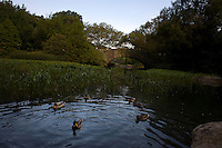 The Pond in Central Park in New York. Sept. 30, 2008. Robert Caplin For The New York Times
