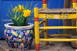 In front of a blue door, a yellow chair and a colorful chinese pot containing some daffodils create a cheerful spring scene on a Santa Fe patio