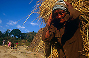 With a dark, weathered face, an elderly man carries a harvest of straw on his back - a traditional way of bringing in the harvested - in the Himalayan kingdom of Nepal. The man is close to the viewer, looking directly at us while other members of his community appear around a bend. Agriculture accounts for about 40% of Nepal's GDP, services comprise 41% and industry 22%. Agriculture employs 76% of the workforce, services 18% and manufacturing/craft-based industry 6%. Agricultural produce — mostly grown in the Terai region bordering India — includes tea, rice, corn, wheat, sugarcane, root crops, milk, and water buffalo meat. Industry mainly involves the processing of agricultural produce, including jute, sugarcane, tobacco, and grain.