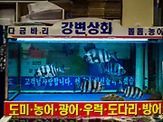 08 OCTOBER 2018 - SEOUL, SOUTH KOREA: Fish for sale in the retail section of the Noryangjin Fish Market. The auctions start about 01.00 AM and last until 05.00 AM. Noryangjin Fish Market is the largest fish market in Seoul and has been in operation since 1927. It opened in the current location in 1971 and was renovated in 2015. The market serves both retail and wholesale customers and has become a tourist attraction in recent years.          PHOTO BY JACK KURTZ