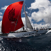 Team Lady Mariposa caught the racing bug as an Oyster 625 through entering events from Oyster regattas to RORC offshore races, and over the course of three years the team felt their hunger for speed would be best channelled into a race boat. After selling the Oyster 625, efforts were ploughed into the regeneration of the team – and so Lady Mariposa Racing was born, with a Ker 46.