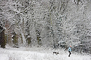 Woman walks the dog on winter's day across snow-covered Hampstead Heath, North London, United Kingdom
