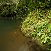 On the Road to Hana in Maui lies the haipua'ena falls - hidden from the road.