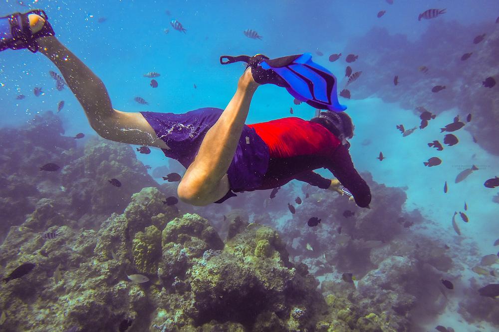 Snorkeling off the island of Bora Bora, Society Islands, French Polynesia.