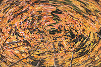 Round shape like vortex with leaves and branches in brilliant brown and yellow  color with many shades and light on leaves.Colors of the fall.