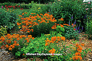 63821-05607 Butterfly Milkweed (Asclepias tuberosa), Red Bee Balm (Monarda didyma), Yellow Daylily, Blue Veronica (Veronica sp.), Purple Coneflowers (Echinacea purpurea) in garden in Marion County IL