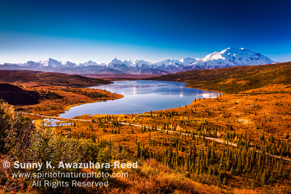 Aerial view of Mt. Denali and Wonder Lake with fall color tundra hill under blue sky. Denali National Park & Preserve, Interior Alaska, Autumn.