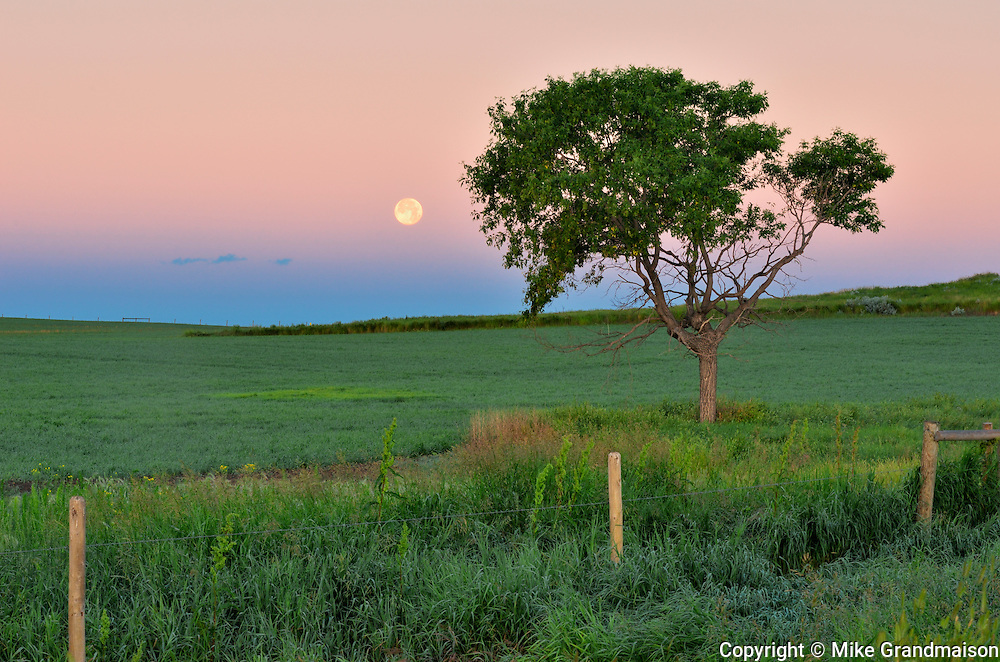 Moon setting on the prairie besides a tree at sunrise. West Block<br /> Grasslands National Park<br /> Saskatchewan<br /> Canada