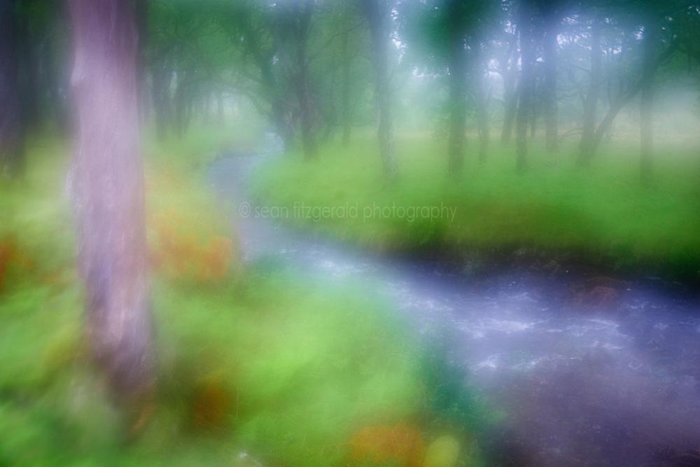 Stream through Sheeffrey Wood, Sheeffrey Hills, County Mayo, Ireland