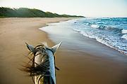 A sunset ride down pristine Mamoli Beach, Southern Mozambique