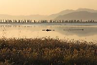 Galicak area with hare's tail (Lagurus ovatus) in the foreground. In the background are mediterranean cypresses (Cupressus sempervirens). Adriatic sea. Delta of the Neretva river (trans-boundary area Croatia-Bosnia-Herzegovina/Croatia),  Dalmatia region, Croatia.  <br /> Elio della Ferrera / Wild Wonders of Europe