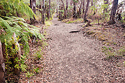 A stone path traverses through the Lava Tree State Park on the Big Island of Hawaii.
