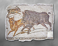 First half of the 3rd century AD Roman mosaic depiction  a wild boar and hare hunt. From Hadrumetum (Sousse), Tunisia.  The Bardo Museum, Tunis, Tunisia. Grey background .<br /> <br /> If you prefer to buy from our ALAMY PHOTO LIBRARY  Collection visit : https://www.alamy.com/portfolio/paul-williams-funkystock/roman-mosaic.html - Type -   Bardo    - into the LOWER SEARCH WITHIN GALLERY box. Refine search by adding background colour, place, museum etc<br /> <br /> Visit our ROMAN MOSAIC PHOTO COLLECTIONS for more photos to download  as wall art prints https://funkystock.photoshelter.com/gallery-collection/Roman-Mosaics-Art-Pictures-Images/C0000LcfNel7FpLI
