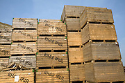 Large wooden crates used for seed potatoes stacked in farm yard, Shottisham, Suffolk, England