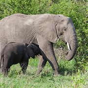 Kruger National Park. South Africa. Organization for Tropical Studies Trip 2009.