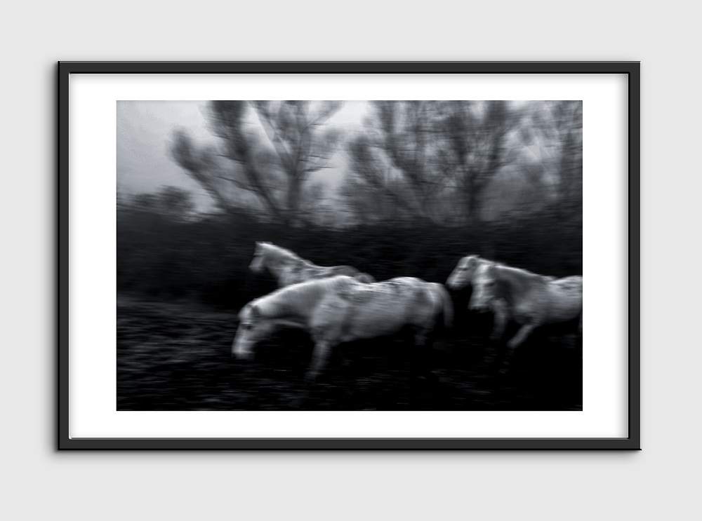 High Quality Fine Art Prints<br /> Camargue horses, photo taken at Cona Island, Italy<br /> <br /> 20 x 30 cm - Numbered Limited Edition of 25<br /> 30 x 45 cm - Numbered Limited Edition of 25<br /> 50 x 75 cm - Numbered Limited Edition of 12<br /> <br /> Printed at professional lab in Milan on Hahnemühle Photo Rag papers.<br /> <br /> They all come signed and numbered.<br /> <br /> Frame NOT included.<br /> <br /> Shipment<br /> Make sure that the address of delivery is correct and that you have given all the elements necessary to identify the exact delivery address (name/number on the intercom, preferred delivery times, staircase, unit/suite, mobile phone number for quick contact, etc).<br /> Once the print is ready, It will be shipped via courier and you will receive a tracking number. Please allow up to one week to fulfil the order plus 2 to 5 business days for delivery (depending on location).<br /> <br /> Handling the print<br /> On receipt, take care in removing it from the cardboard or the tube. I recommend that you take it straight to a framer to ensure optimal condition. Each print has a white paper border to allow the framer to handle the print and for protection during transport.<br /> <br /> Prices<br /> Pricing is for print only. Frame is only for illustration purpose and NOT included. Sizes other than those listed are available on request. Framing options are also available on request. As these are Limited Editions, prices may rise as availability decreases.<br /> <br /> Returns<br /> In the unfortunate event that the print arrives damaged (and that you can show that it was damaged before arrival), please make contact and send it back to me within 14 days, I will replace it on receipt of the damaged print back to me.<br /> <br /> Message me for questions about crops, sizes, papers, prints, deliveries or framing.<br /> Email: pcruciatti@gmail.com or whatsapp +39.335.6263208