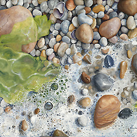 Tiny white pebbles peek out from sea foam and seaweed.  Vibrant green sea lettuce perfectly complements the warm white pebbles and puts you there on a quiet beach.<br /> 22 x 28, oil on birch panel