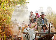 Local peope on carts pulled by cows ride down a dusty road in rural Cambodia