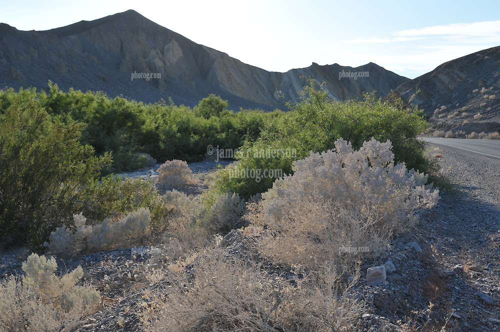 Late Afternoon along Route 190 in Death Valley Natinal Park