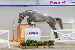 012, Napardi<br /> KWPN Hengstenkeuring 2021<br /> © Hippo Foto - Dirk Caremans<br />  03/02/2021