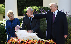 """President Donald Trump pardons """"Peas"""" from South Dakota at the National Thanksgiving Turkey pardoning ceremony in the Rose Garden of the White House in Washington, DC on November 20, 2018. Photo by Olivier Douliery/ABACAPRESS.COM"""