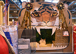 © Licensed to London News Pictures. 24/11/2012. Birmingham, UK 'Bostin Buddy' sits in his elaborate cage. Cats are shown by their owners and breeders at The Supreme Cat Show held by the Governing Council of Cat Fancy at the National Exhibition Centre in Birmingham today, 24 November 2012. The Cat Show is one of the largest cat contests in Europe with over one thousand cats being exhibited and judged. Photo credit : Stephen Simpson/LNP