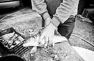 Cleaning and gutting freshly caught carp (saran) in a village near Virpazar and Lake Skadar, Montenegro © Rudolf Abraham