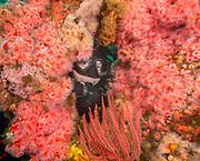 ''El Rey'' shipwreck with strawberry anemones.