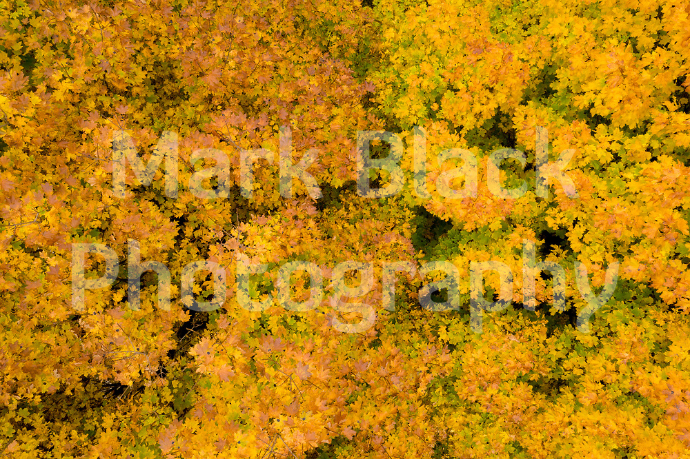 Autumn Colors of orange, yellow and red and hiking trails as seen from above at LeRoy Oaks Forest Preserve in St. Charles, Illinois. Photo by Mark Black