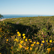 Wildflowers at Halibut Point in Rockport, MA