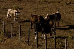 Basilicata - Cow in a field